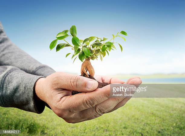 Men's hand and small tree