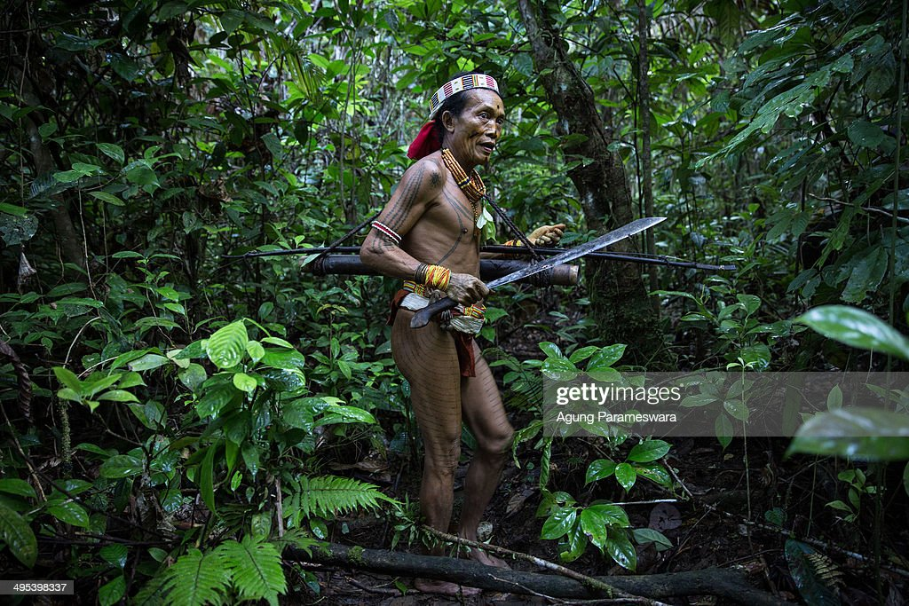 Mentawanese Sikerei, Aman LauLau, walks to collect leaves in the jungle during Inauguration Ritual preparation for Aman Gotdai as a New Sikerei on May 25, 2014 in Butui Village, Siberut Island, West Sumatra, Indonesia. Sikerei (Mentawai Shaman) is the leader of the traditional rituals of the Mentawai people. Their religion, which is known as the 'Arat Sabulungan', is the belief in the power of leaves and is considered to represent the forces of kindness (Ketcat Simaeru) and the forces of evil (ketcat sikatai). The Sikerei plays a vital role in the Mentawai tribe because of their abillity to heal sickness and also communicate with the ancestor and the spirit of the nature around them. According to a Sikerei from Butui Village, Aman LauLau (70), being a Sikerei isn't a coercion but a heart allure. To become a Sikerei is a huge honour within the tribe and requires dedication to learning the ways of the tribe and understanding how to communicate with the spirits of the forest through Sikeri poems and dance rituals. 28 years old Aman LauLau's son, Aman Gotdai decided to became a Sikerei: 'i want to follow the path of my father and my brother Aman Lepon', said Aman Gotdai. Nowadays, with the influences of modern culture, it is becoming harder for the Mentawai people to find those who are willing to become Sikerei.