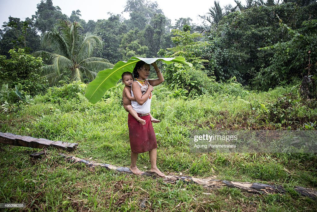 Mentawanese woman Bai Lepon holds a banana leave while carry her son during rainy on May 26 2014 in Butui Village Siberut Island West Sumatra...