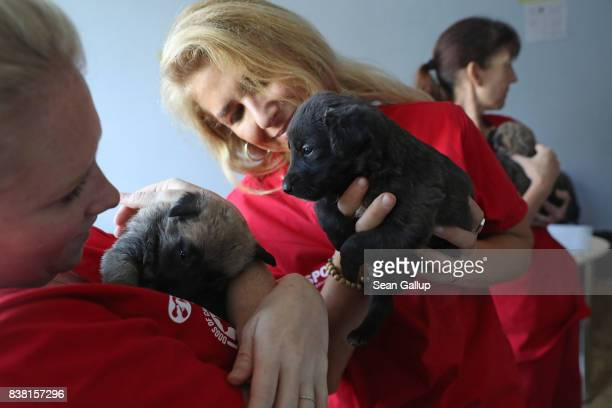 CHORNOBYL' UKRAINE AUGUST 17 Meredith Ayan Executive Director of SPCA International a USbased animal rescue nonprofit SPCA Program Director Lori...