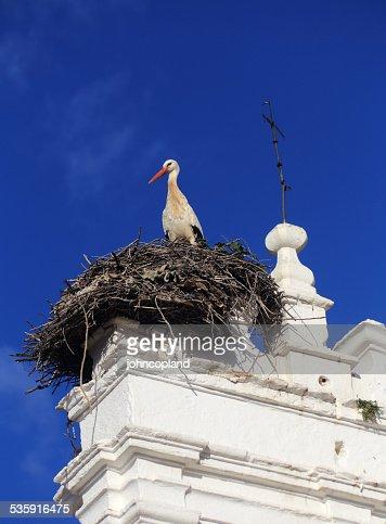 Merida, Extremadura, Spain. Stork nesting. : Stock Photo
