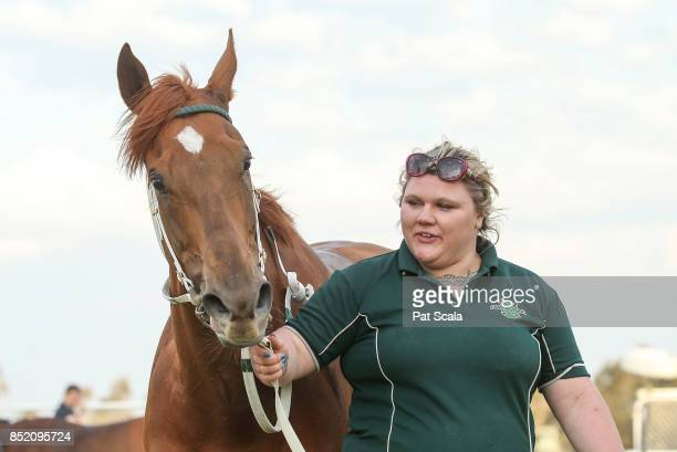 Meridian Star after winning Greater Shepparton City Sprint BM64 Handicap at Tatura Racecourse on September 23 2017 in Tatura Australia