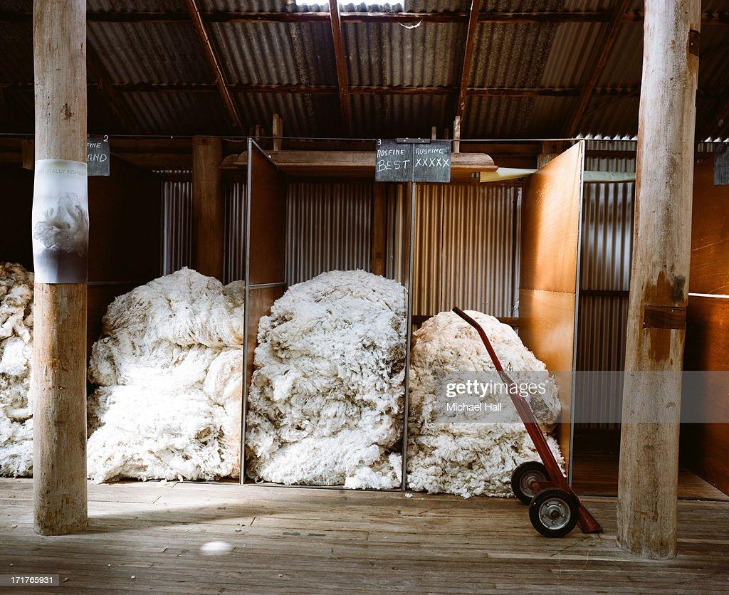 Merino wool fleeces : Stock Photo