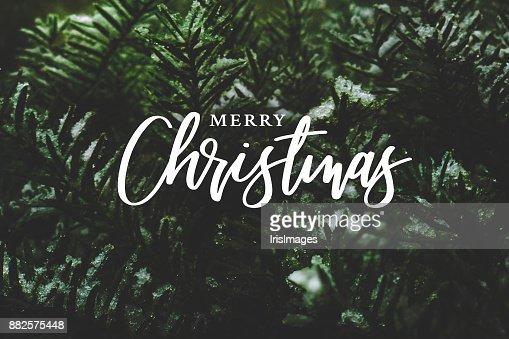 Feliz Navidad caligrafía sobre ramas de hoja perenne cubierta de nieve : Foto de stock