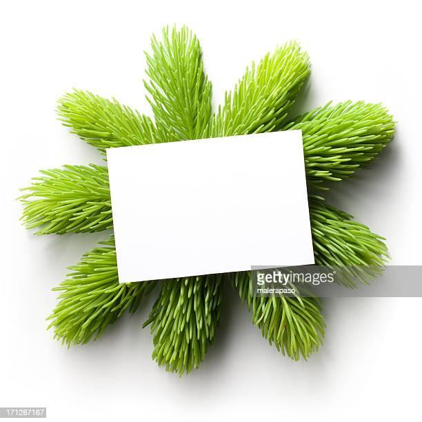 Buon Natale. Carta bianca con ramoscelli di abete verde.