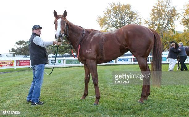 Mesclun after winning Ableworks Maiden Plate at SportsbetBallarat Racecourse on May 24 2017 in Ballarat Australia