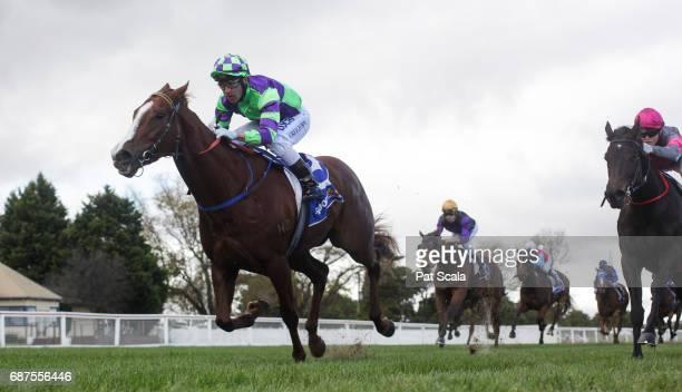 Mesclun ridden by Alan Creighton wins the Ableworks Maiden Plate at SportsbetBallarat Racecourse on May 24 2017 in Ballarat Australia