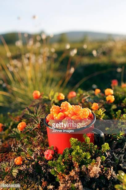 Metal mug full of cloudberries