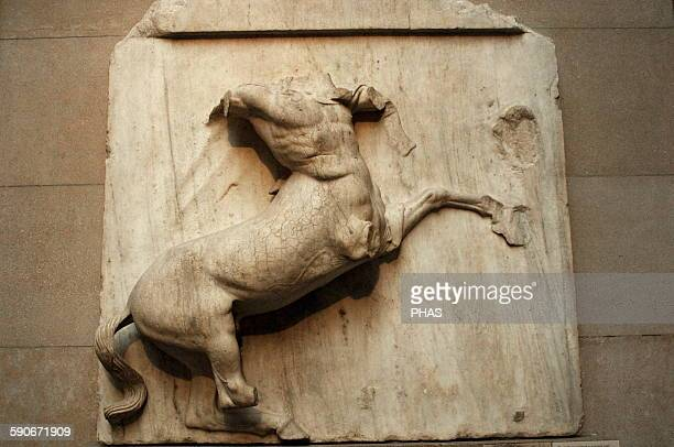 Metope V from the Parthenon marbles depicting part of the battle between the Centaurs and the Lapiths Centuur 5th century BC Athens British Museum...