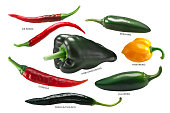 Mexican chile peppers: Arbol, Pasilla, Guajillo, Poblano, Habanero, Jalapeno. Clipping paths