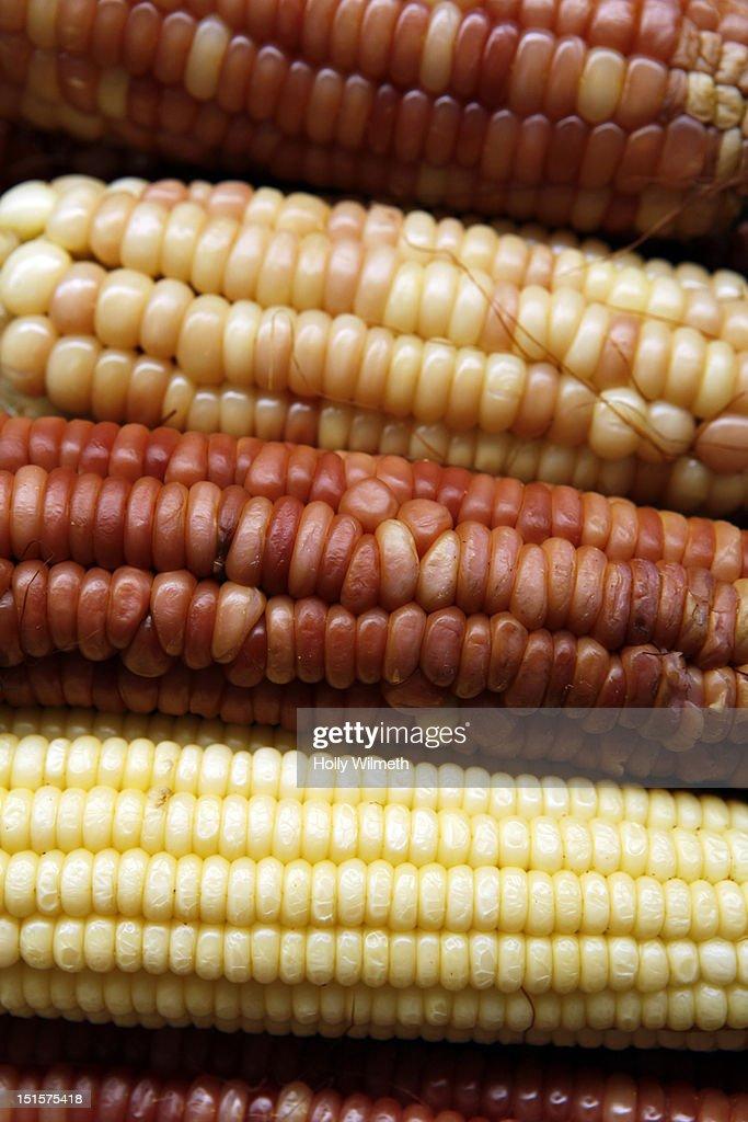 Mexican Corn : Stock Photo