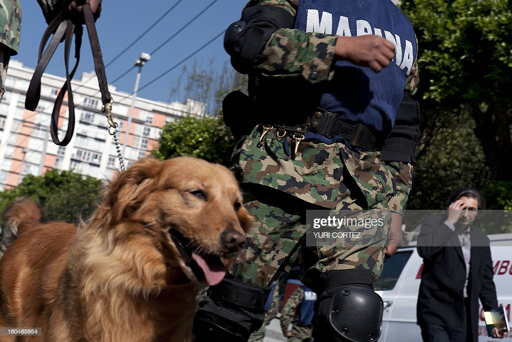 Mexican Navy soldiers with a sniffer dog arrive at the headquarters of the state-owned Mexican oil giant Pemex, following a blast on the eve, in Mexico City on February 01, 2013. An explosion rocked the skyscraper, leaving up to 32 dead and 121 injured. Hundreds of firefighters, police and soldiers toiled through the night after the blast ripped through an annex of the 54-floor tower leaving concrete, computers and office furniture strewn on the ground. AFP PHOTO/YURI CORTEZ