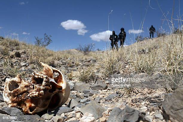 Mexican police stand near a skull discovered with other remains in what is thought to be a large grave in the desert of victims of recent drug...