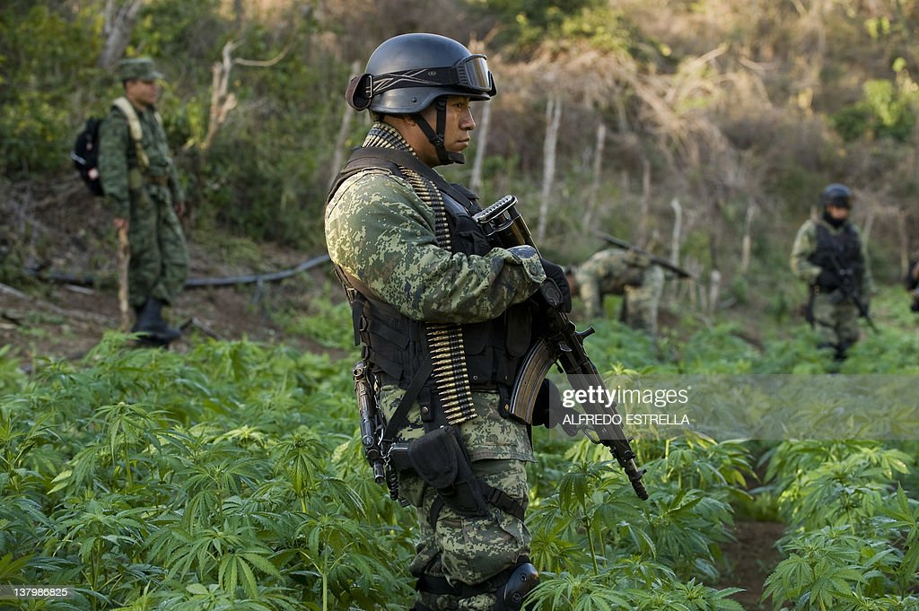 A Mexican soldier stands guard at a marijuana field, in Los Algodones community, Culiacan, Sinaloa State, Mexico on January 30, 2012. Mexican soldiers found a marijuana field and incinerated the drug as part of the Culiacan-Navolato operation. More than 40.000 people have been killed in rising drug-related violence in Mexico since December 2006, when President Felipe Calderon deployed soldiers and federal police to take on organized crime. AFP PHOTO/Alfredo Estrella