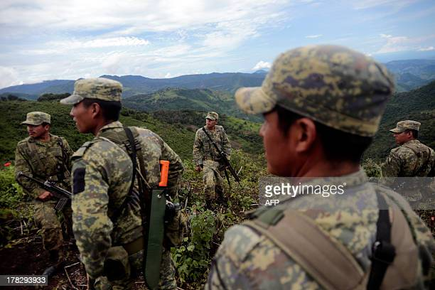 Mexican soldiers stand in poppy fields before eradicating them at Petatlan hills in Guerrero state Mexico on August 28 2013 Mexico is being whipped...