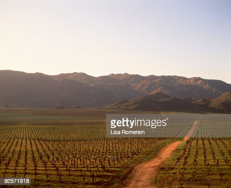 Mexican vineyard
