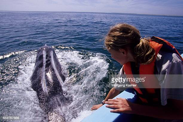 Mexico Baja California Near San Carlos Magdalena Bay Girl With Gray Whale Model Release 200209237