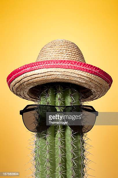Mexico cactus. Summer Humor Sombrero Mexican Culture Holiday Heat