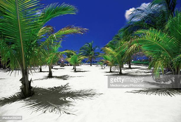 Mexico, Cozumel, Chankanaab National Park, Palm trees on a beach