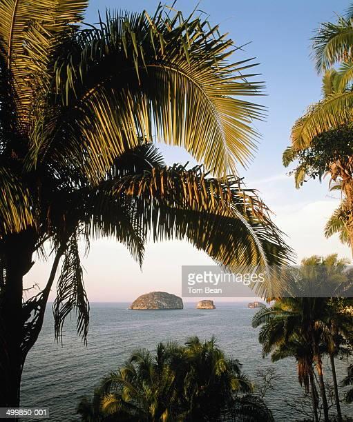 Mexico, Jalisco, Puerto Vallarta, Los Arcos rocks, palms in fore