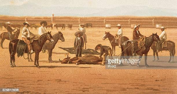Mexico San Luis de Potosi state The Herradero ranch Hot iron hot bull branding Lithograph 1880 Color