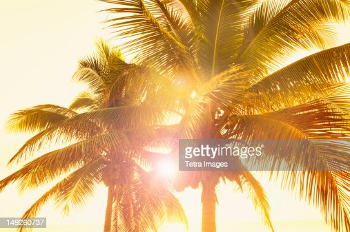Mexico, Yucatan, Palm trees at sunset