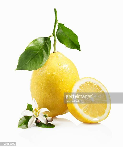 Meyer Lemon with leaves and Blossom