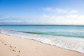 Seagulls in Miami Beach, Florida