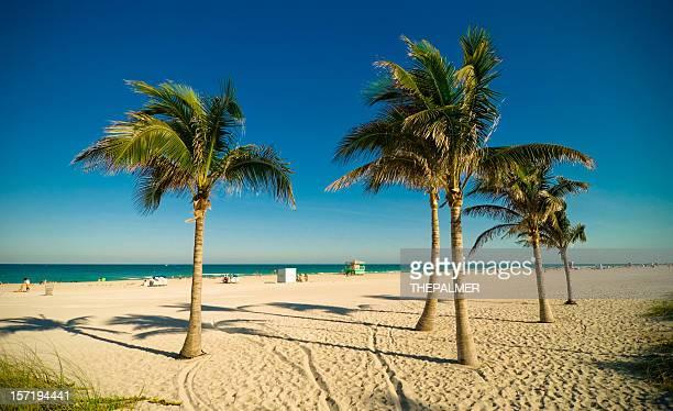 Palmeras en miami beach