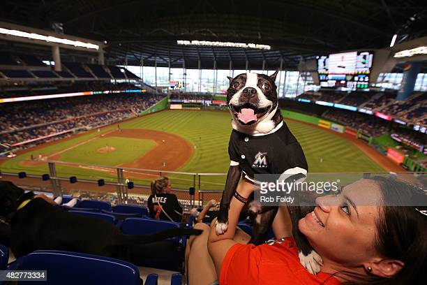 Miami Marlins fan and her dog look on from the stands duing the game against the San Diego Padres at Marlins Park on August 2 2015 in Miami Florida