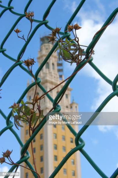 Miami's Freedom Tower behind fence