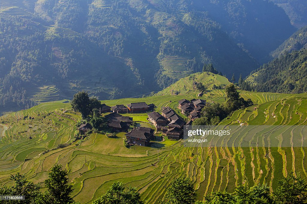 Miao village in the middle of rice terraces