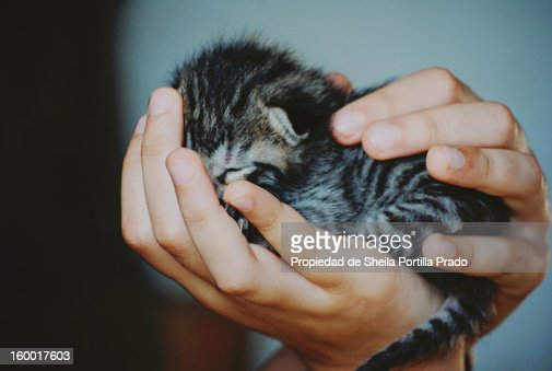 Miau : Stock Photo