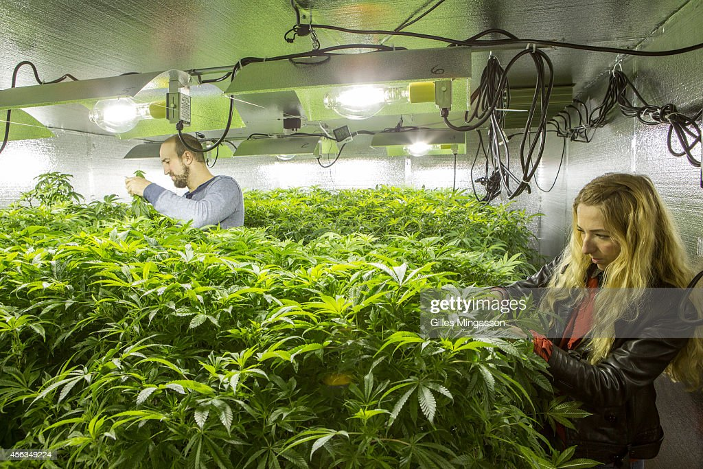 Micah Sherman and Nicole Graf who moved from Brooklyn NY to cultivate cannabis care for the 'mother plants' which will seed their 7000 sq feet indoor...