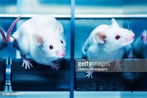 analysis of maus the animal behavioral Spiegelman also draws behavioral comparisons between humans and animals  for example, when some species of animals are taken to.