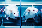 Mice in the rotarod performance test