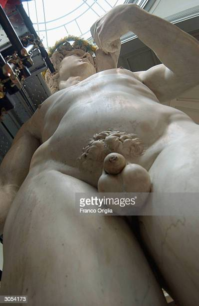 Michelangelo's David is pictured at the Gallery of the Academy March 8 2004 in Florence Italy In honor of international women's day restorers placed...
