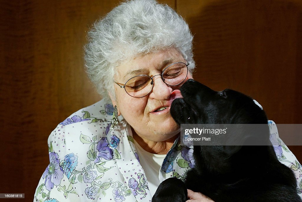 Micki Beerman holds a Lab pup named Ace during a news conference by the American Kennel Club to discuss the release of the club's annual list of the most popular dog breeds in the U.S., on January 30, 2013 in New York City. The club says that for the 22nd straight year the Labrador Retriever is the nation's most popular dog followed by the the German Shepherd.
