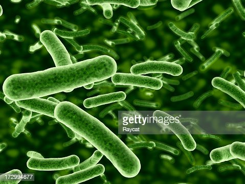 Microscope view of bacteria flowing : Stock Photo