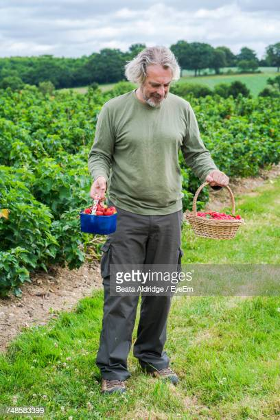 Mid Adult Man Holding Raspberries In Baskets At Farm