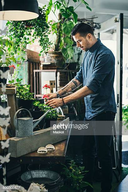 Mid adult man working in plant shop