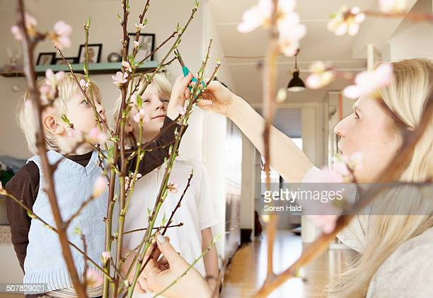 Mid adult mother and two sons trimming blossom twigs in sitting room
