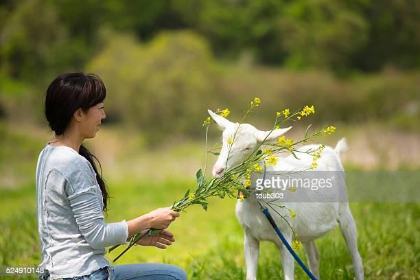 Mid adult woman feeding her pet goat at organic farm