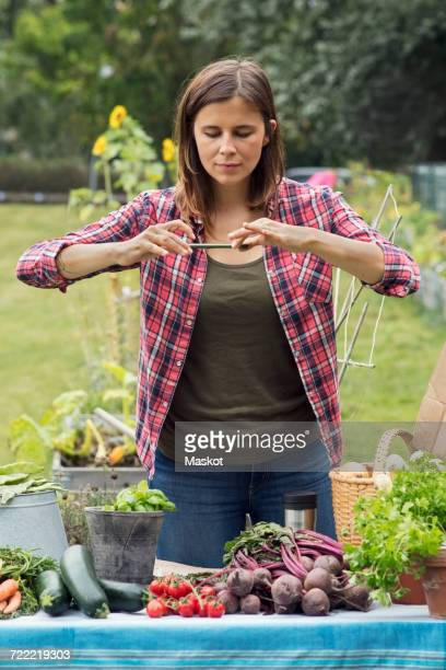 Mid adult woman photographing freshly harvested vegetables in urban garden