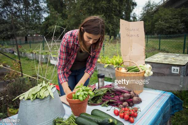 Mid adult woman standing at table full of garden vegetables