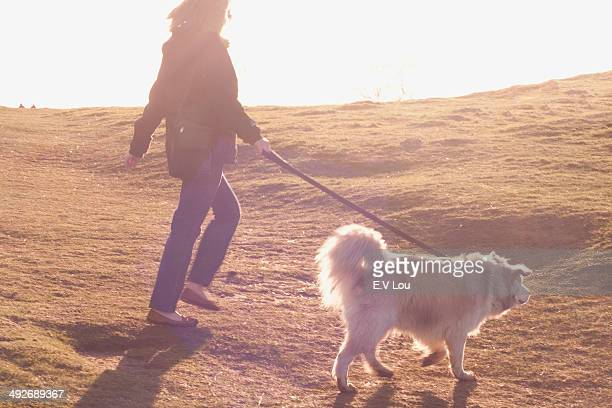 Mid adult woman walking her Pyrenean mountain dog in field