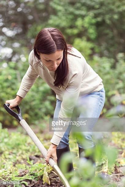 Mid adult woman working in organic farm