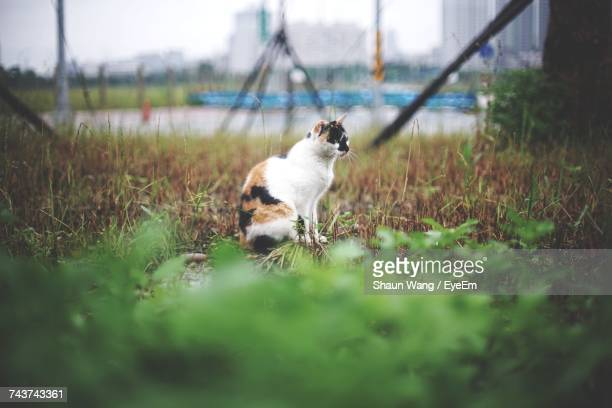 Mid Distance View Of Cat Sitting On Grassy Field