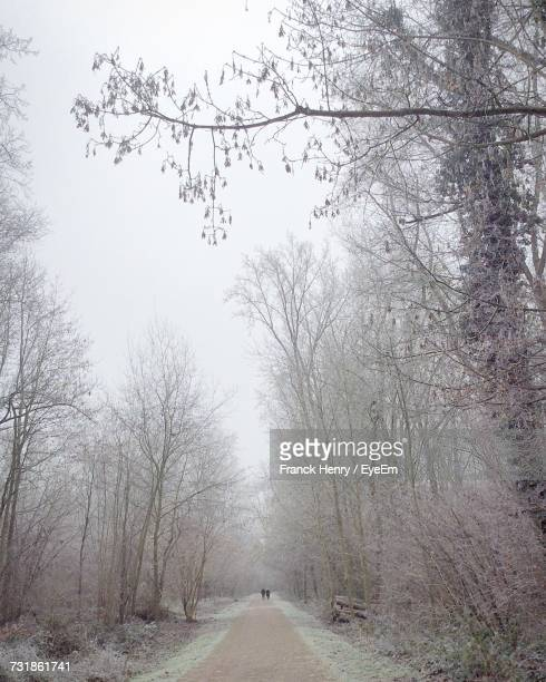 Mid Distance View Of People Amidst Bare Trees On Road During Winter