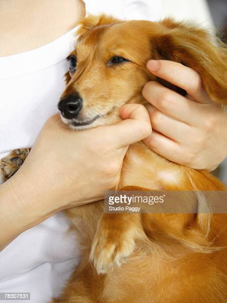 Mid section view of a woman holding a dog